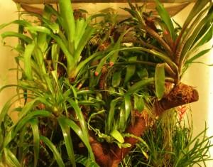 Epifytní rostliny